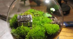 terrarium_garden